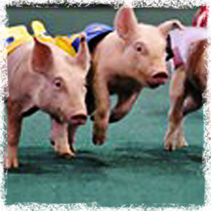 Cattle Baron's Gala Pig Races